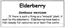 Elderberry Text Sample