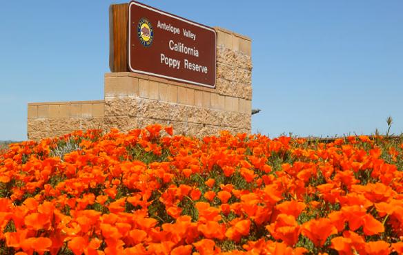 Poppy Reserve