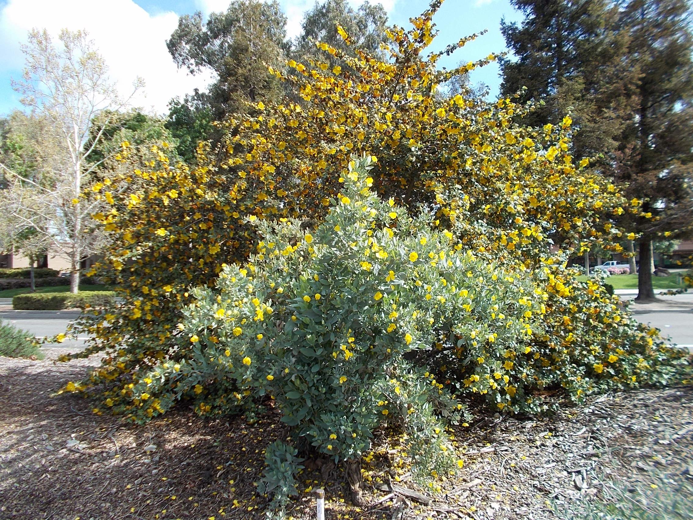 The Granada Native Garden Newsletter
