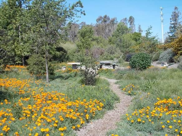 The Granada Native Garden in April, 2014