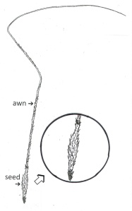 Complete Seed Drawing