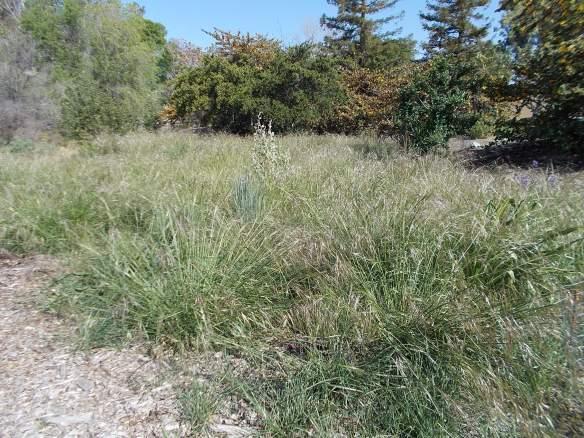 Needlegrass field