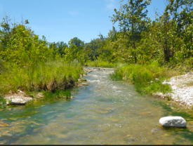 A typical riparian zone