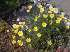 Tidy tips (grassland, B1 & A)