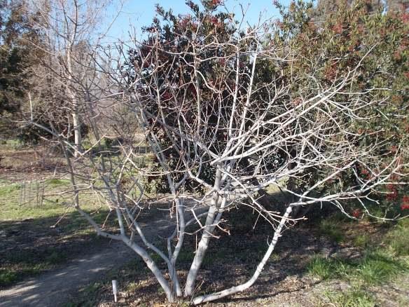 Buckeye, dormant (1-20-15)