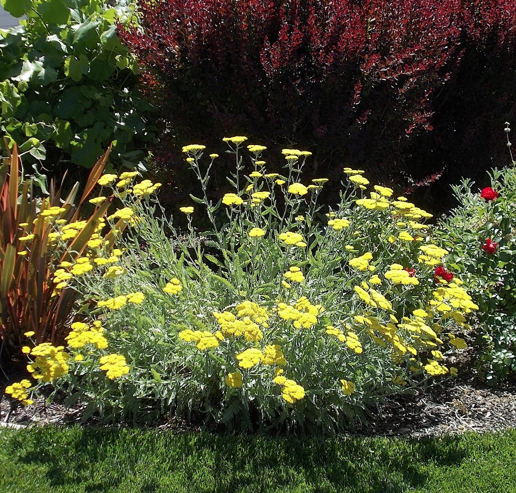 California Native Plant Landscape Design Examples: The Granada Native Garden Newsletter